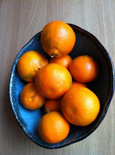 A bowl full of juicy sweet Tangelos - and there are many more left to pick