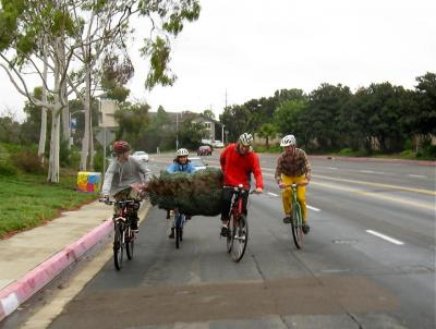 Taking the lane with our green cargo - Christmas tree transport by bike